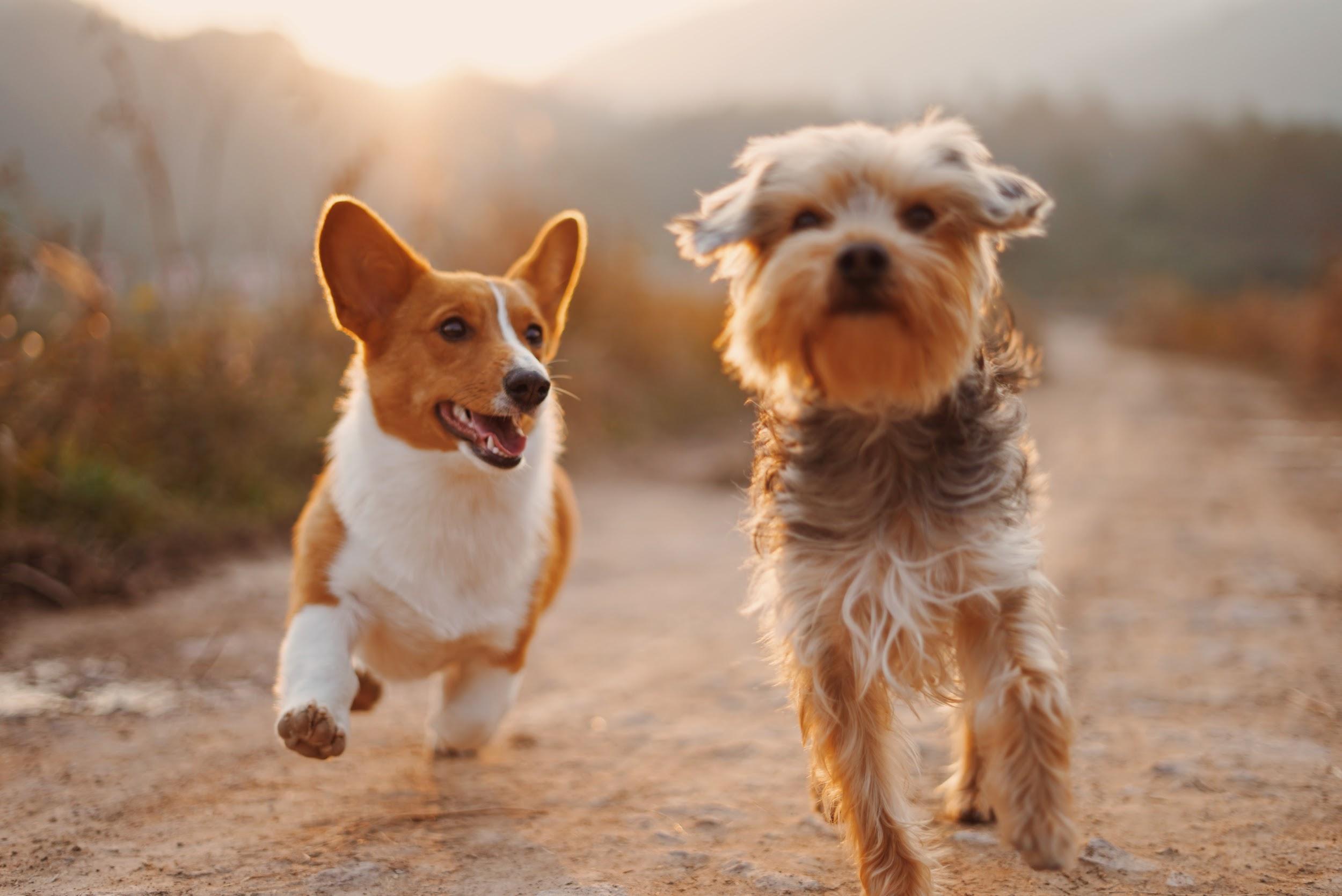Adjusting-Your-Pets-to-Life-Together