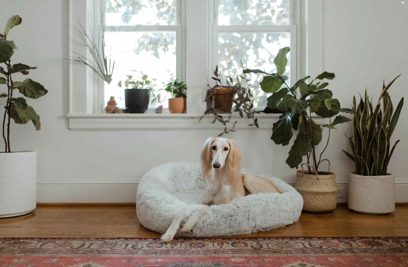 what to do with pets belongings